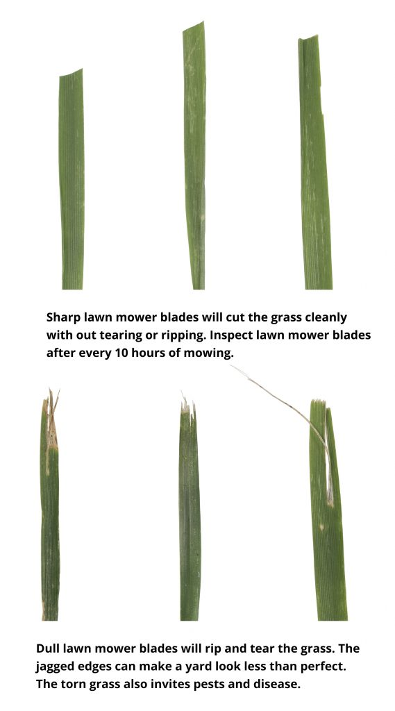 Grass Blade Infor Graphic